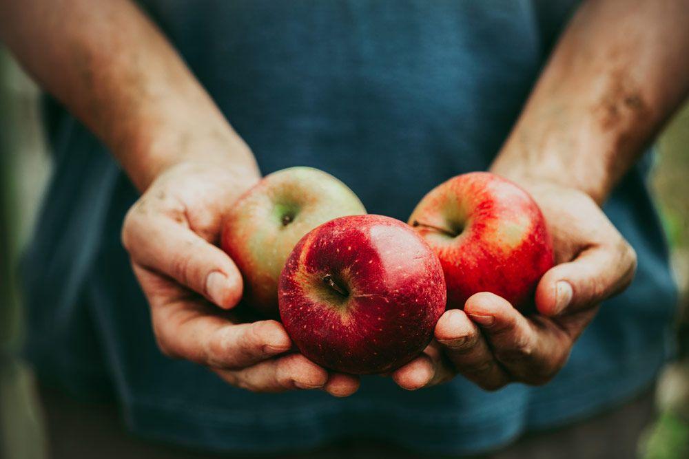 dlaczego jabłka są zdrowe